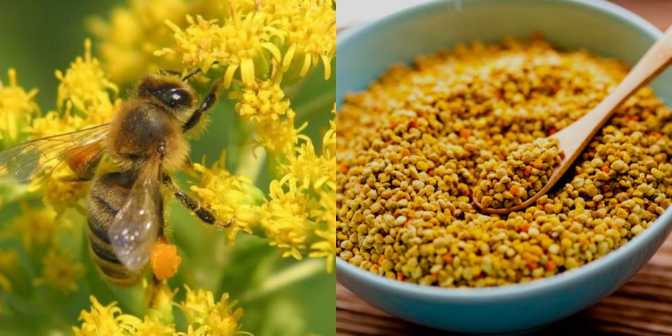 méh perga és látás